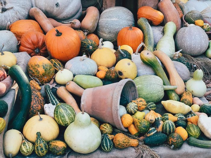 Pumpkins Colorful Autumn Gardening Organic Food Organic Harvest Fall Large Group Of Objects Choice Food Abundance Variation Food And Drink Full Frame No People Day Backgrounds For Sale Freshness Market Still Life Healthy Eating Pumpkin Multi Colored Nature