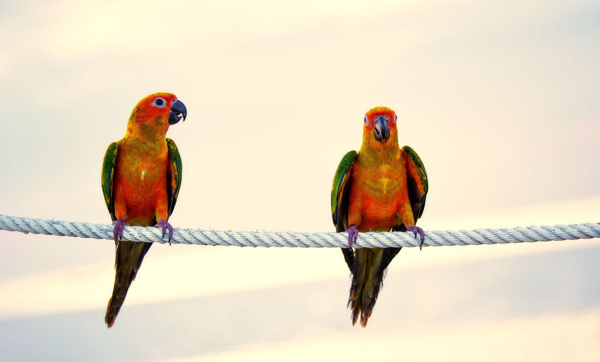 Close-up of birds perching on rope against sky