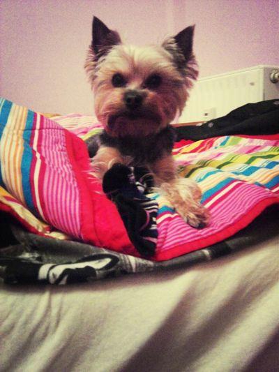 I love u ;** I Love My Dog