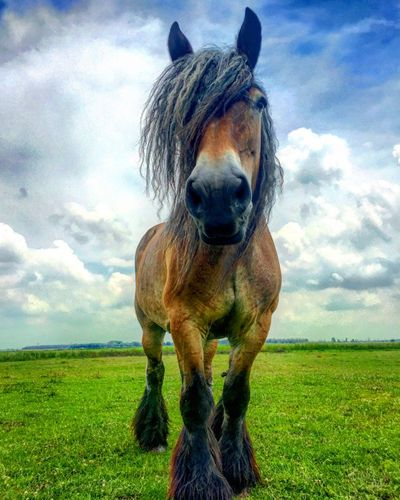 Belgian wild horse Grass Field Animal Themes Domestic Animals Mammal Sky Cloud - Sky One Animal Landscape Green Color No People Pets Outdoors Nature Dog Day Grassland Pasture Beauty In Nature