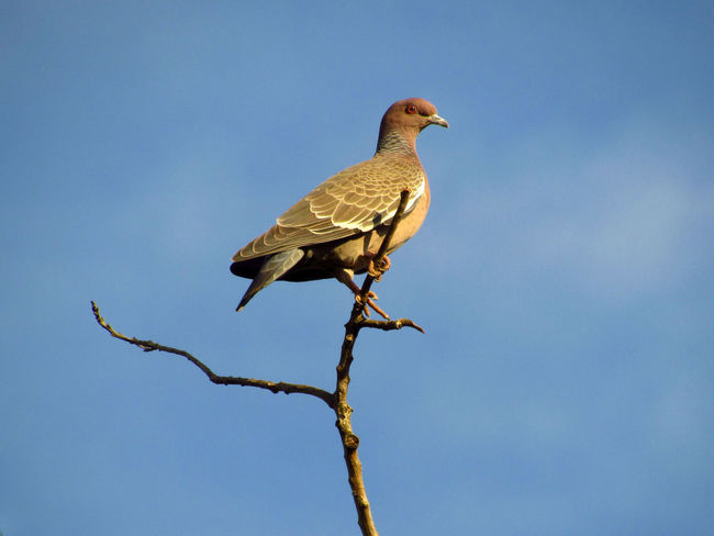 Animal Animal Themes Avian Beauty In Nature Bird Bird Of Prey Bird Photography Birdwatching Blue Bough Branch Branches And Sky Close-up Dove Doves Low Angle View Nature Outdoors Perched Perched Bird Perching Perching Bird Sky Spread Wings Wildlife