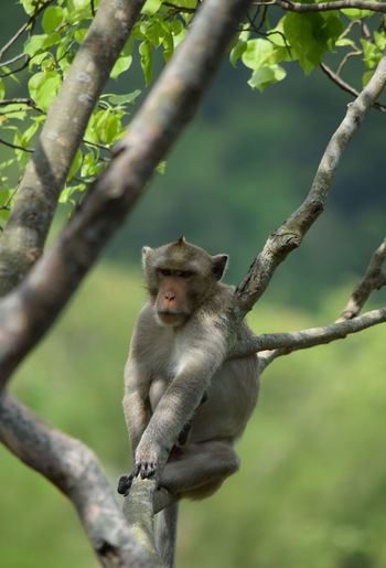 monkey sitting on the tree Animal Wildlife One Animal View Lovely Natural Outdoors Sitting Monkey Forest Cute Monkey