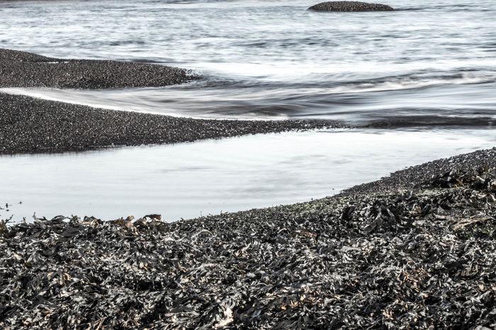 Like a Silvery Carpet with Seaweed. Nature Sea Baltic Sea