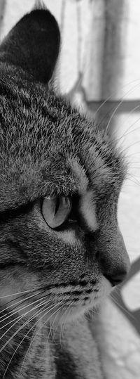Cat Domestic Animals Animal Themes Feline Bellezanatural