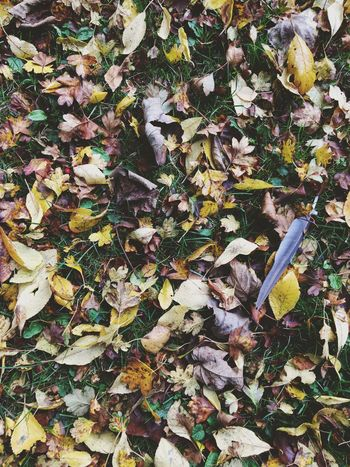 Autumn leaves Leaf Autumn Leaves Dry Nature Falling Outdoors Fallen Beauty In Nature Close-up