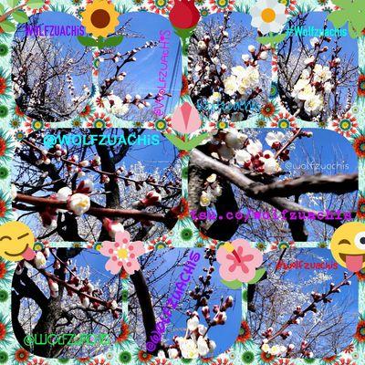 Wolfzuachis Colaj Collage