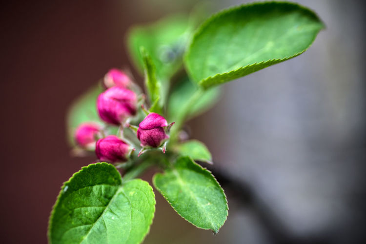 Flower buds.