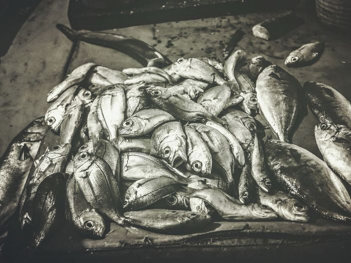 Vacation Mood Morroco Moments Travel Photography Olympus Pen-f September 2017 Morrocobeauty Travel Destinations Mirleft Illustration Lets Eat Fish Market Direct From  Ocean