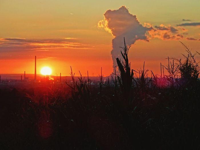 Sunlight Sunset Red Sun Silhouette Nature Cloud - Sky Sundown Landscape Panorama Plant Sky Field Beauty Industry Industrial Landscapes Redskysunset RedSky 2017 Autumn Colors Autumn Leverkusen