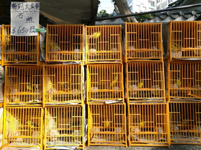 Caged up Metal Cage Metal Grate Security Prison Trapped Protection Birdcage Grid No People Outdoors Day Steel Prisoner Security Bar The Week On EyeEm Birds For Sale Birds For Sale. Birds All In A Row Summer Road Tripping