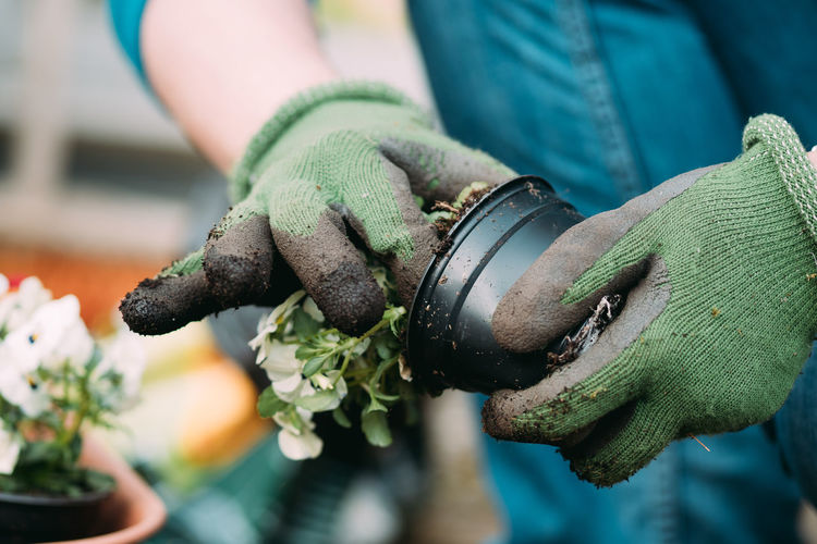 Gardening Gardening Close-up Day Finger Focus On Foreground Garden Photography Gardening Gardening Equipment Gardening Glove Glove Green Color Hand Holding Human Body Part Human Hand Human Limb Lifestyles Midsection Nature Occupation One Person Protective Glove Protective Workwear Real People Selective Focus Working Go Higher