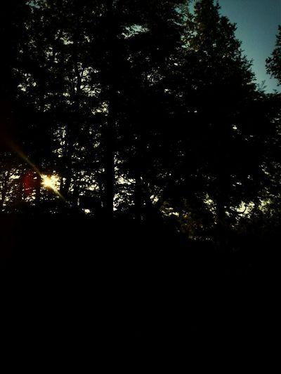 Traveling Sun Landscape Trees