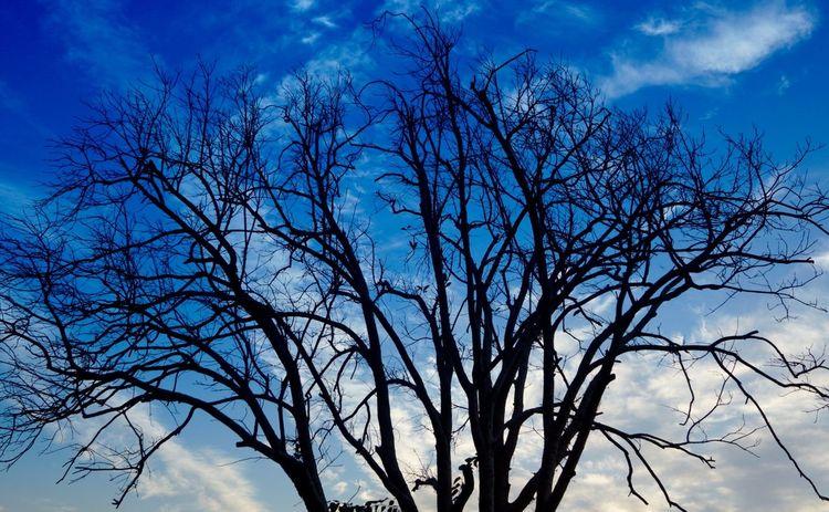 First Eyeem Photo I Love My City Changsha Tree Leaves Light And Shadow Sky