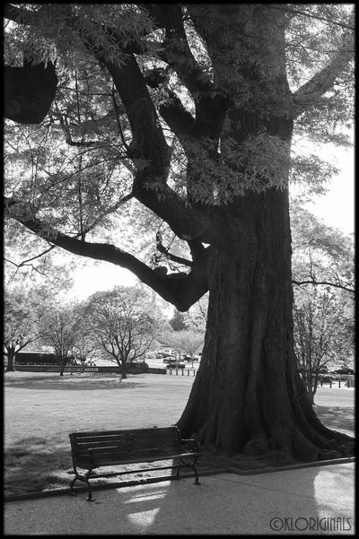 Tree Black And White Photography Washington, D.C.