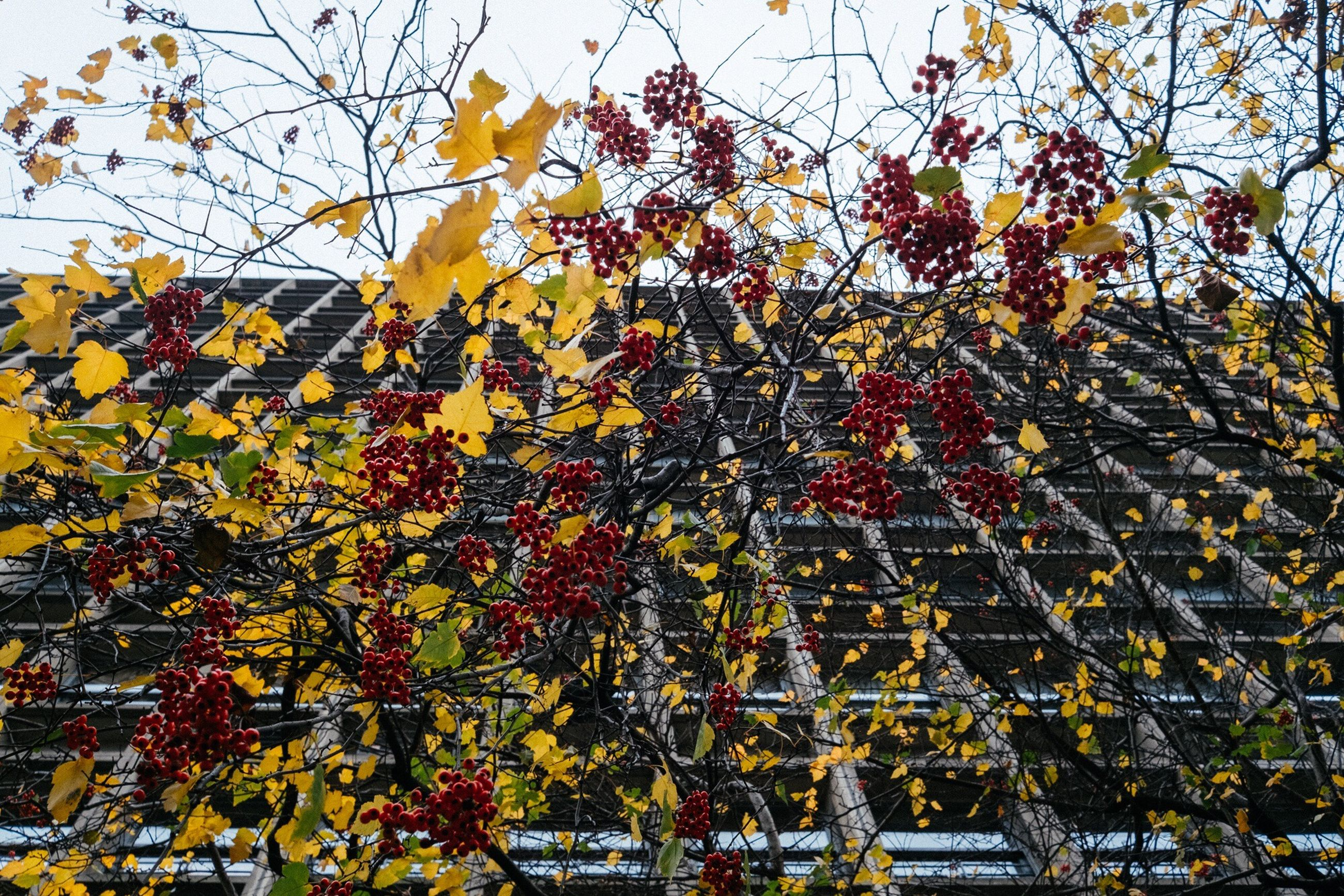 growth, flower, branch, tree, low angle view, day, autumn, outdoors, nature, beauty in nature, yellow, no people, leaf, freshness, architecture, built structure, building exterior, fragility, springtime, close-up, sky