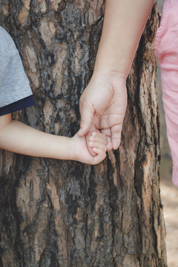 Close-up of girl holding tree trunk