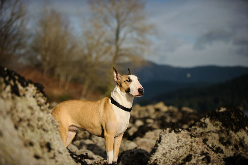 Dog standing on rock against sky