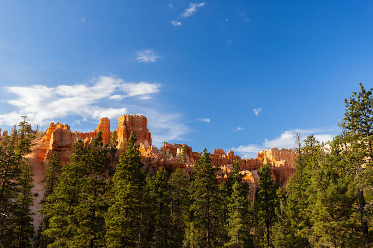 shiny rocks of Bryce Canyon Sky Beauty In Nature Nature Tranquil Scene No People Plant Tranquility Outdoors Bryce Canyon Tree Cloud - Sky Scenics - Nature Growth Day Blue Architecture Non-urban Scene Land Rock Environment Green Color Eroded