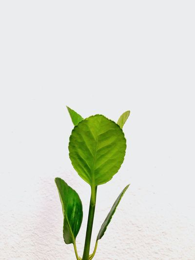 Green against