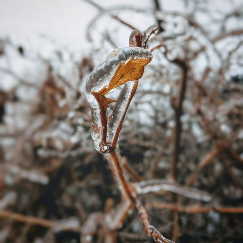 ice rain EyeEm Selects Focus On Foreground Day Close-up Nature Outdoors Branch Beauty In Nature No People First Eyeem Photo