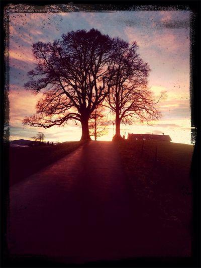 Sonnenuntergang Allgäu Natur