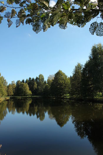 Beauty In Nature Blue Calm Clear Sky Day Green Color Growth Lake Majestic Nature No People Reflection Standing Water Tranquil Scene Tree Water Waterfront Växjö  Sweden