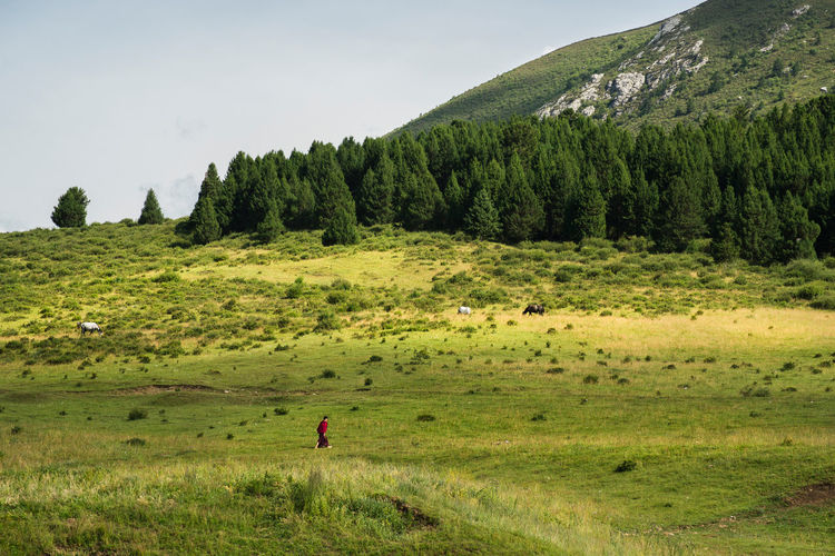 A monk is walking on the hillside alone. Shot in Gannan, China. Alone Countryside Grass Grassland Green Green Color Hillside Idyllic Landscape Lonely Monk  Mountain Nature Peaceful Prairie Scenics Tourism Tranquil Scene Tranquility Travel Walking