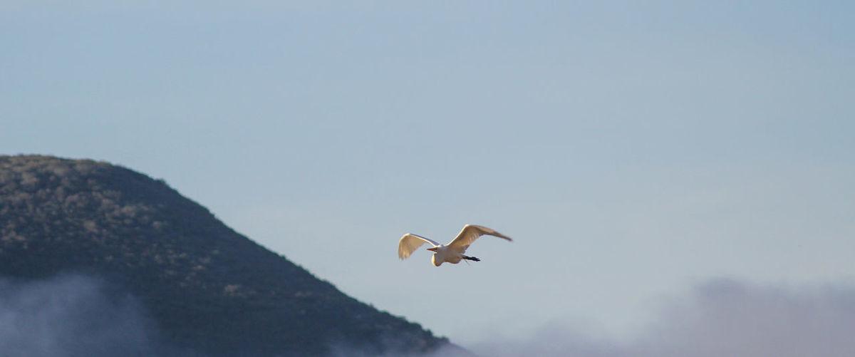 Birds Crane Bird Bird Photography Birds_collection Mountains Esconidido Lake Hodge