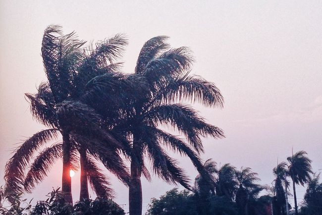 Wind of palms Palm Tree Tree Sunset Low Angle View Scenics Tranquility Growth Beauty In Nature Tranquil Scene Tall - High Sky Nature Outdoors Sun Non-urban Scene Coconut Palm Tree Multi Colored