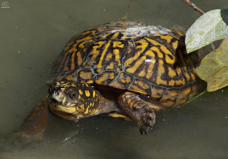 Animal Animals Nature Animal Themes Looking At Camera Nikonphotography Nikon Sun River Tortoise Turtle 🐢 Amphibian Reptile