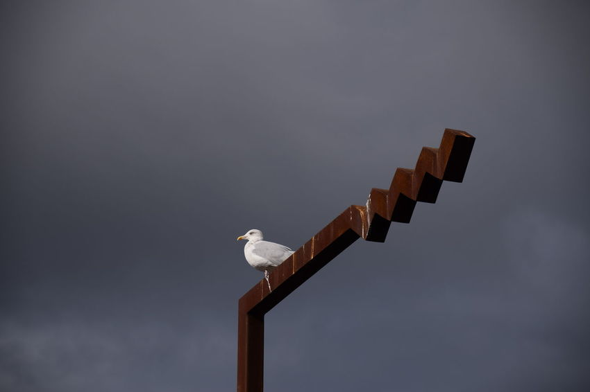 Seagull on sign post. Seagulls Wildlife Birds Bird Bird Of Prey