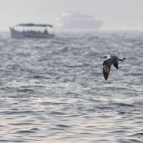 Seabird Beautiful Sea Arabiansea Travelingboat Instagood TBT  Canon1200d