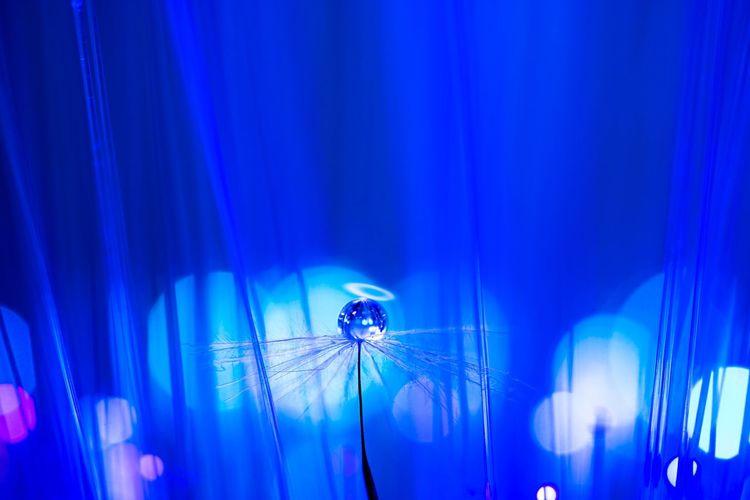 Waterdrop Angel Fluff Of A Dandelion Waterdrops Love_blue Close-up Bokeh Photo Fun Bokeh Photography Sony α♡Love Bokeh Love Getting Inspired SONY ILCE-7M2 SONY SEL90M28G