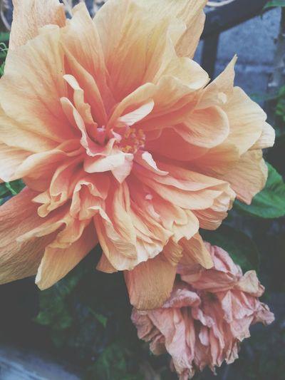flower nature garden yellow First Eyeem Photo