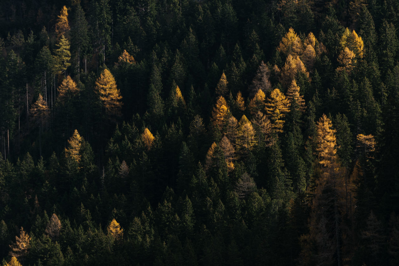 Full Frame Shot Of Trees At Forest During Autumn