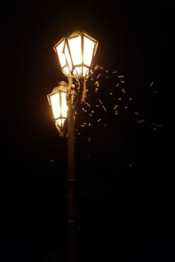 Dark Electric Lamp Electric Light Electrical Equipment Electricity  Glowing Illuminated Insects  Lamp Lamppost Light Light - Natural Phenomenon Lighting Equipment Low Angle View Mayfly Nature Night No People Outdoors Sky Street Street Light