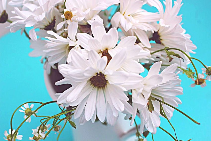 Love To Take Photos :)  White Color Beauty In Nature Freshness Day White Flower Bright Colors