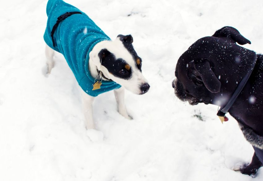 Two cute dogs in snow Animal Behavior Animal Themes Pets Snowing Snow Snow Winter Canine Dog Cold Temperature Pets Animal Themes Animal Mammal One Animal Domestic Animals Domestic Field White Color Land Covering No People Nature Snowcapped Mountain