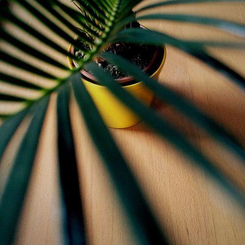 Close-up of pattern