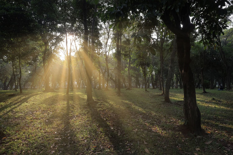 Beauty In Nature Day Forest Growth Land Landscape Lens Flare Monas Nature No People Non-urban Scene Outdoors Park Plant Scenics - Nature Streaming Sun Sunbeam Sunlight Tranquil Scene Tranquility Tree Tree Trunk Trunk WoodLand