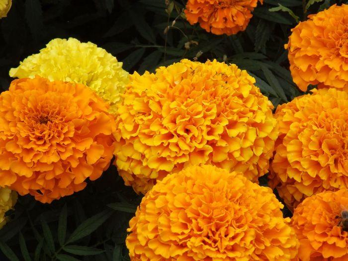 Yellow Flower Taking Photos Popular Photos Landscape Flowers :) Flowers