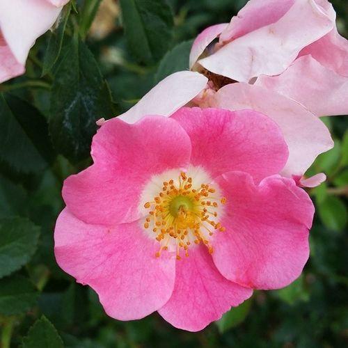Whpsolstice Summersolstice  Solstice Nature nofilters nofilter simplebeauty flowers