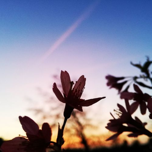 Keep your eyes open 🌼 Nature Sky Silhouette Beauty In Nature Sunset Outdoors Scenics Day No People Plant Classic Beauty In Nature Flower Freshness Nature Pink Color Tree Growth Abstract Colorplay Blue Landscape