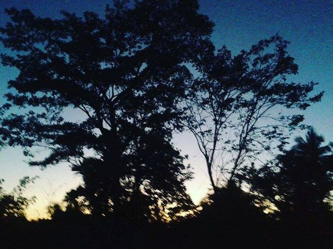 Tree Sky Nature No People Low Angle View Growth Beauty In Nature Silhouette Tranquility Outdoors Branch Treetop Day Star - Space Shadow Colorfull Mypictures Memories ❤ Photographyislife Vacations Bicol, Philippines Outdoor Photography Beauty In Nature Plant Tree