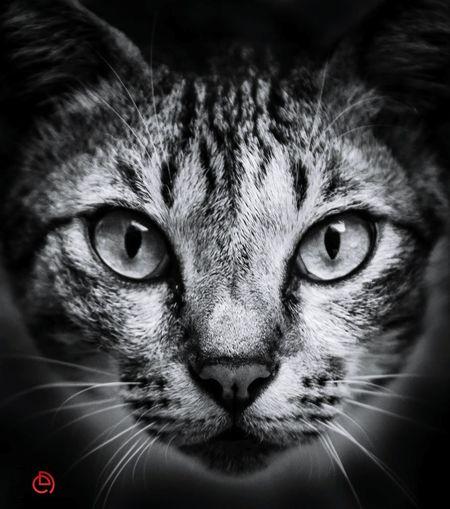 Tiger look. Cat