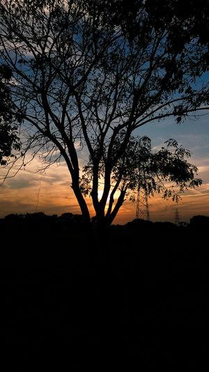 EyeEm Selects Tree Sunset Silhouette Sky Landscape