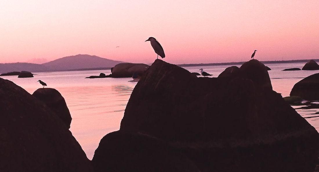 Amanhecer! Amanhecer Beauty In Nature Bird Day Millennial Pink Nature Sunset Water