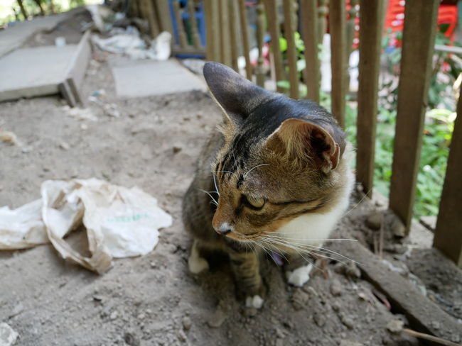 Thai cats are feces on the ground. Feces Animal Themes Cat Close-up Domestic Animals Domestic Cat Feline Mammal No People One Animal Outdoors Pet Pets