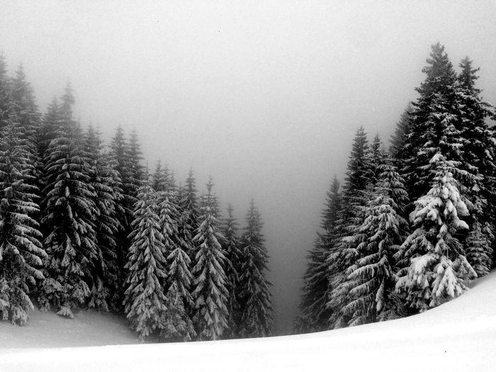 Bregenzerwald Blackandwhite Bwcountry