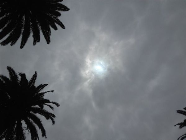 Beauty In Nature Cloud - Sky Day Low Angle View Nature No People Outdoors Palm Tree Sky Tree الطبيعة جمال سحب سماء شمس من الأسفل منظر خارجي نخل